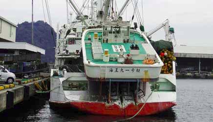 pescadoare autorizate sa pescuiasca bonita vargata