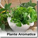 Arome de Plante Aromatice