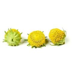 Flori Electric Blossom Liofilizate, 290buc., 20g - SOSA