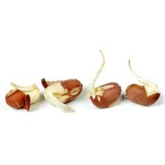 Germeni de Fasole Adzuki, Liofilizati, 100g - SOSA2