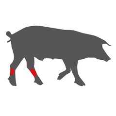 Picior (Fluier/Ciocanel) de Porc LiVar, Congelat, cca. 950g