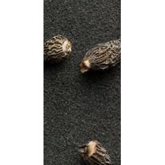 Petite Morels, Zbarciogi Tineri Intregi, 90 g - Wiberg Exquisite
