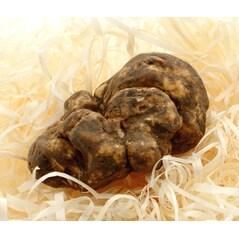 Trufe Albe de Piemonte (Tuber Magnatum Pico) La Bilancia - Intregi & Mari, Proaspete, Italia, Octombrie/Decembrie - per gram